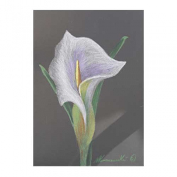 Lily in Lavender Pencil & Oil Pastel