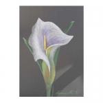 Lily in Lavender Pencil & Oil Pastel